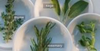 گیاهی برای افزایش شیر مادر