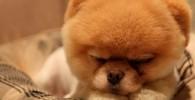 عکس سگ بامزه ای که در فیس بوک محبوب شد!