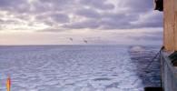 عکس زیبایی یخی آیسلند