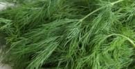 سبزی آرامش بخش را می شناسید؟
