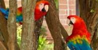 داستان کوتاه : طوطیها از غصه دق میكنند