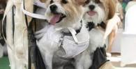 مراسم گرانقیمت ازدواج دو سگ میلیاردر! + عکس
