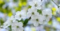 تصاویر زیبا از بهار در اقصی نقاط دنیا