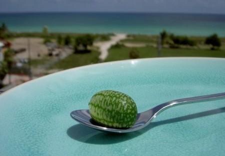 عکس هایی از کوچک ترین هندوانه جهان که بر درخت می روید!