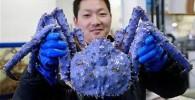 تصاویری از کشف یک خرچنگ بسیار عجیب