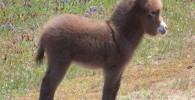 حیوان به این زیبایی دیده اید؟!