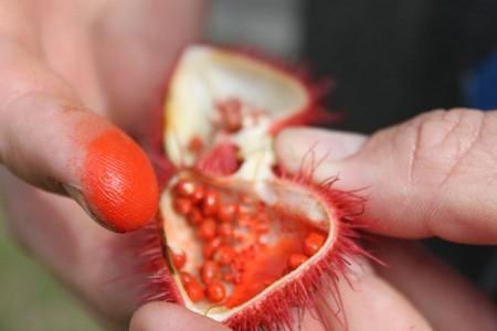 تصاویر درخت رژلب در منطقه آمازون