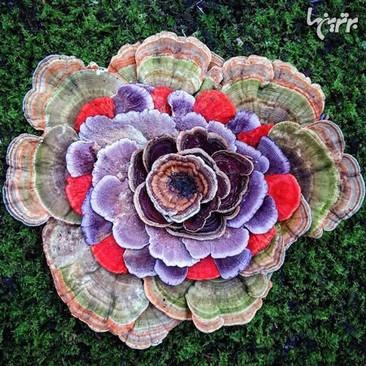 تصاویری از دنیای زیبا و عجیب قارچ ها