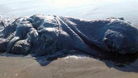 تصویری از کشف موجود غول پیکر در سواحل مکزیک