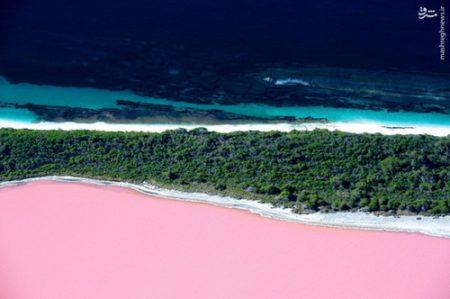 عکس هایی از دریاچه صورتی در استرالیا