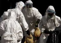 چه کسانی مبتلا به آنفلوآنزای پرندگان می شوند